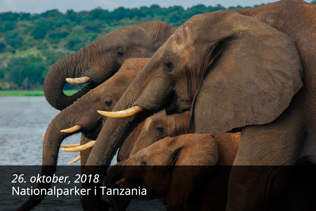 Blog - Nationalparker i Tanzania