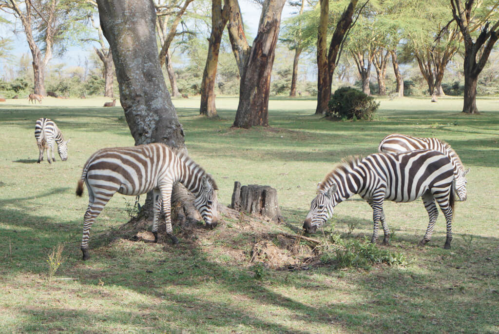 Nairobi National Park, Kenya, Safari