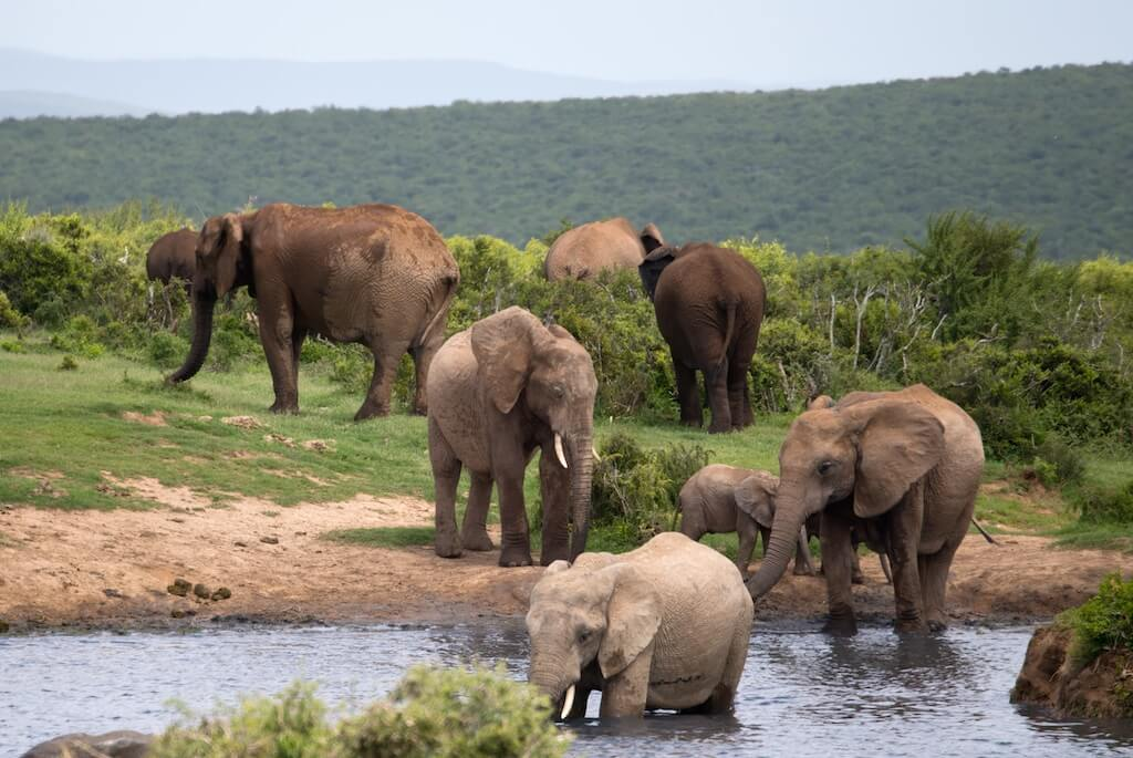 addo-elefant-national-park-sydafrika-jumpstory-1024x685