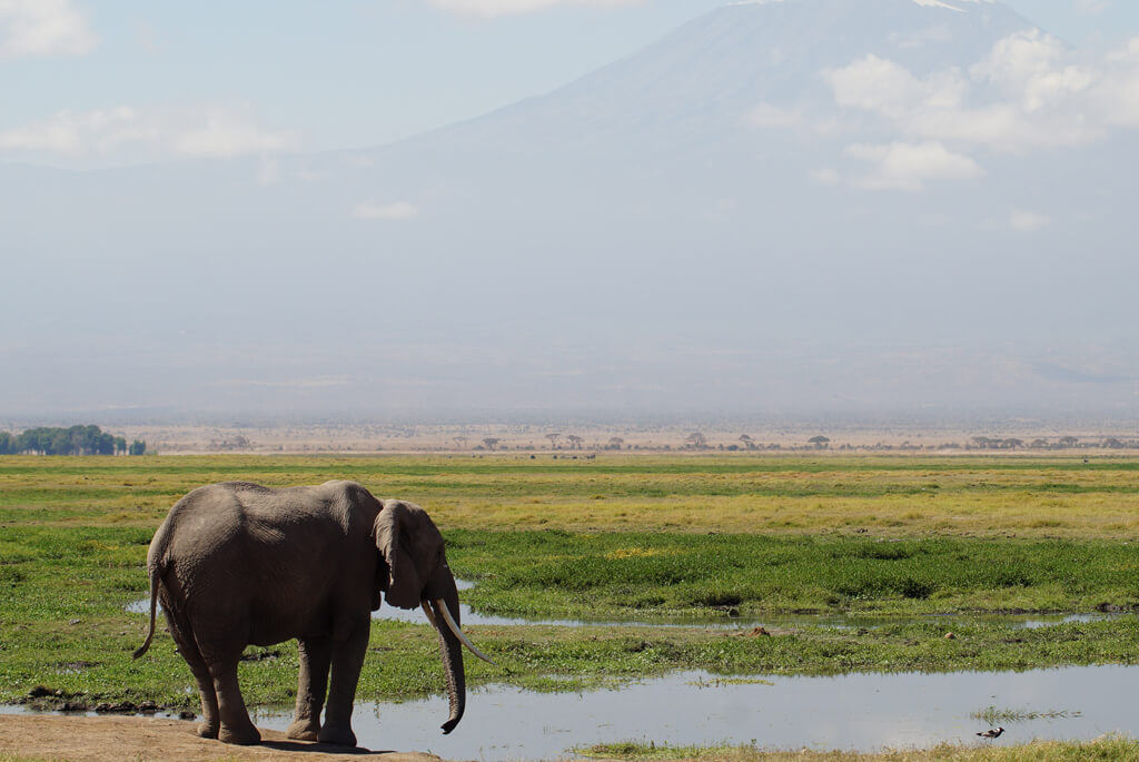 kenya-safari-savanne-elefant-vandhul-1024x685
