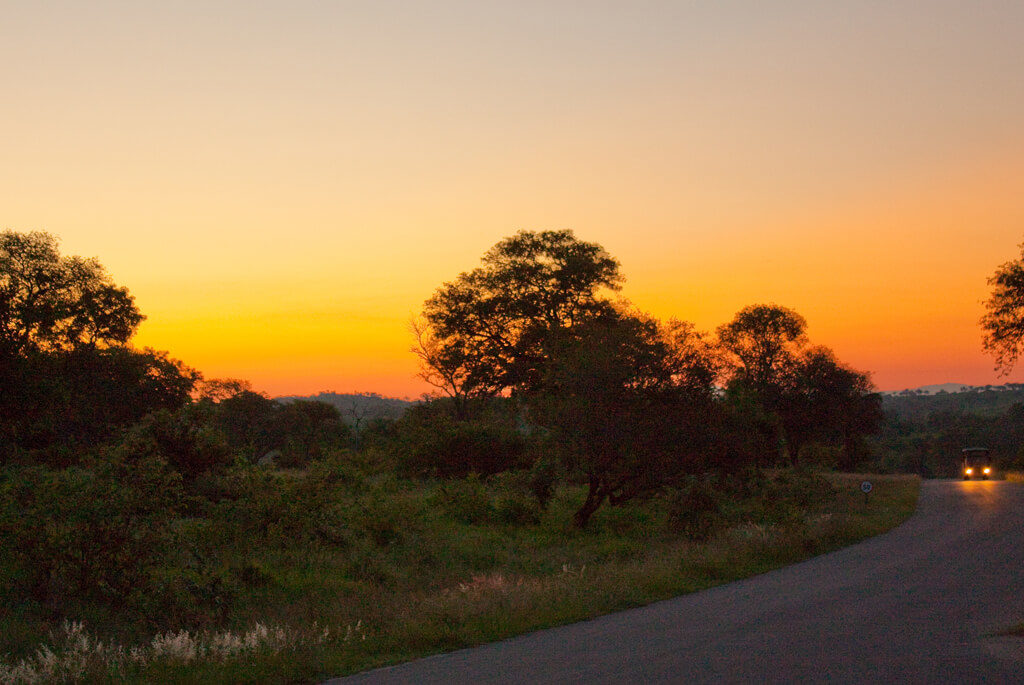 Kruger national park, Sydafrika, safari