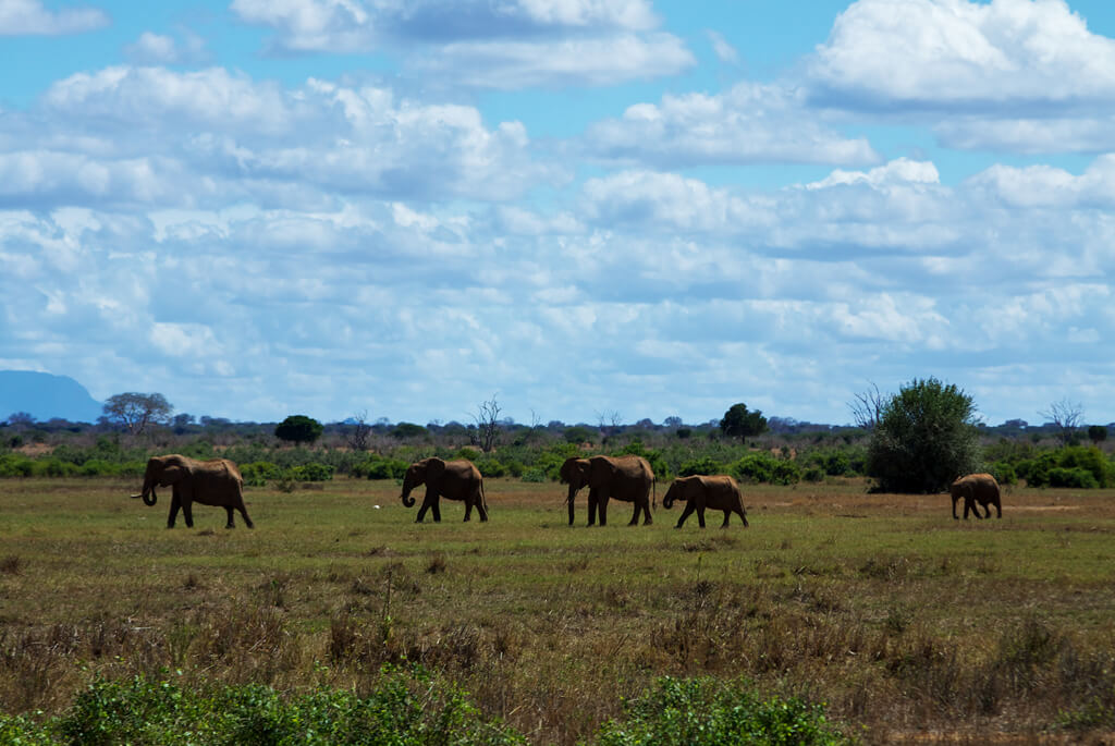 tsavo-national-park-east-01